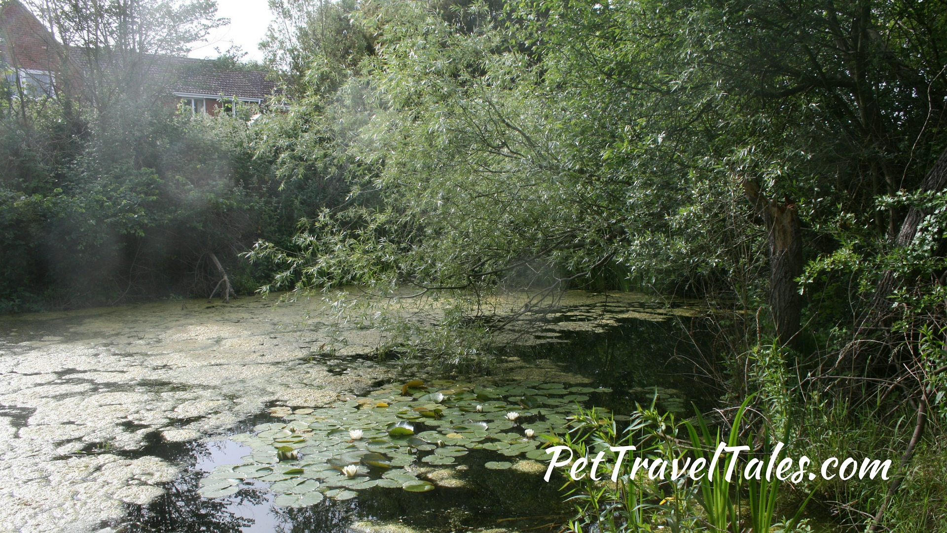Paxton Pits Nature Reserve 9