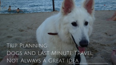 Dog Travel Planning