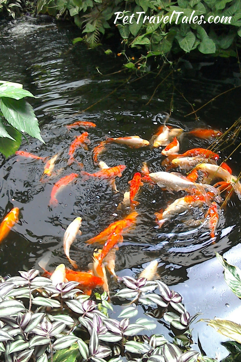 Fish Pond Tropical Wings