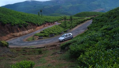 Beautiful Tea Gardens With our Rented Car