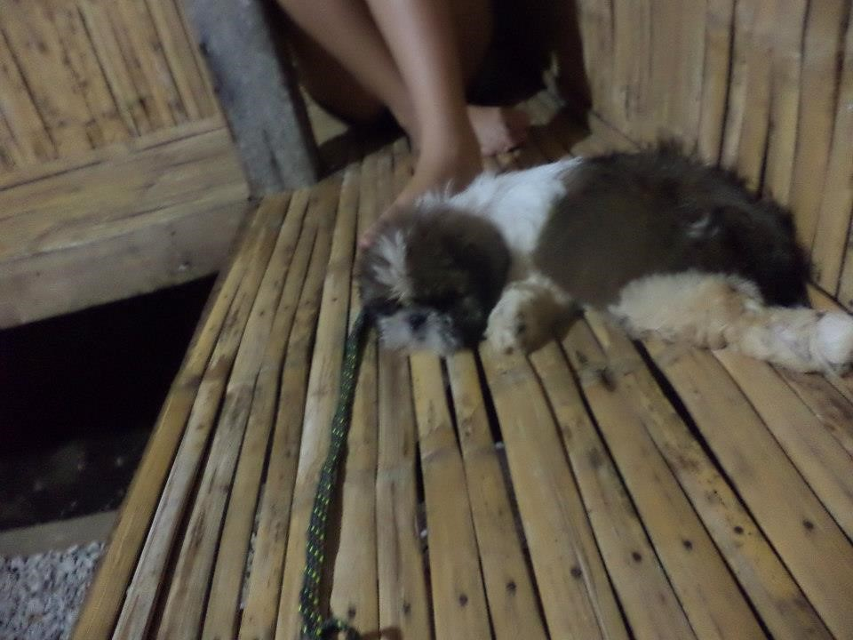 Pet travel in the Philippines, Hinoba-an,