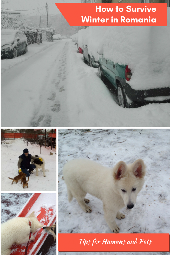 How to Survive Winter in Romania - Travel Tips for Humans and Pets