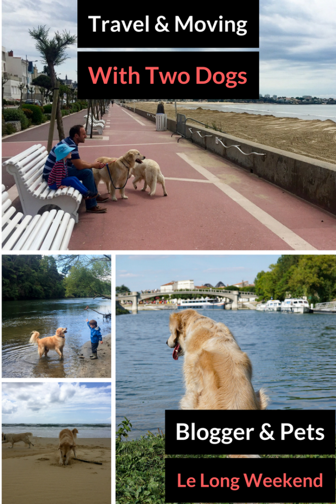 Pet Travel Story: A Family, Two Golden Retrievers, and a Cross-Continent Move