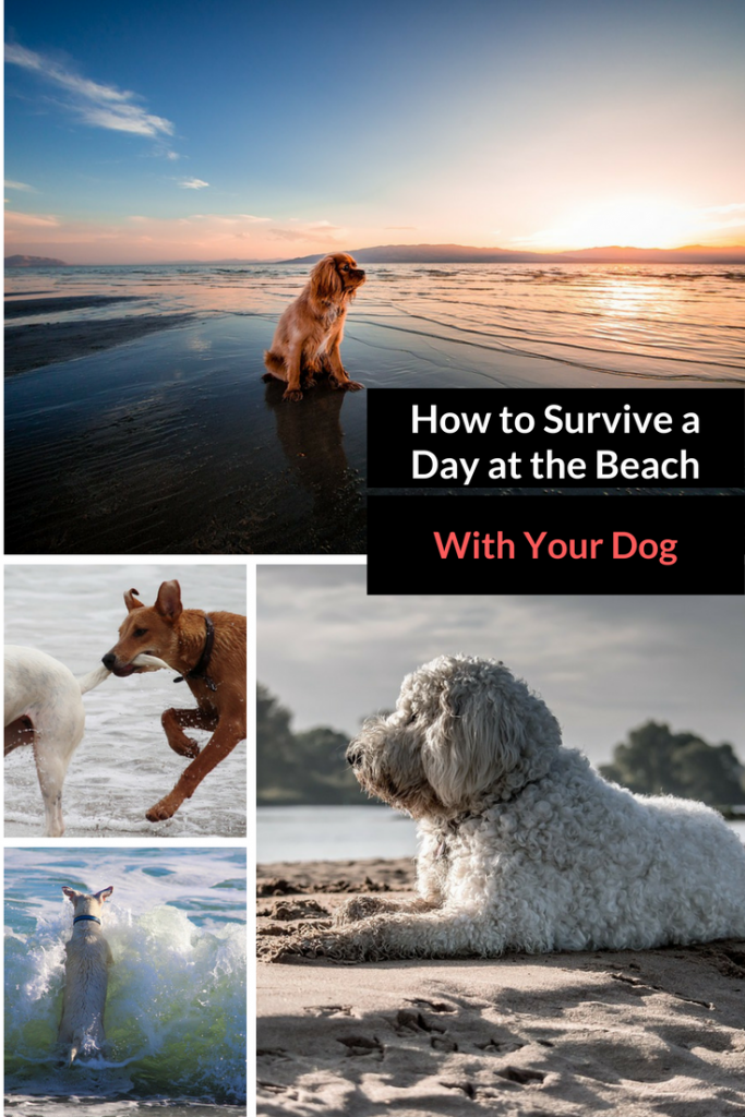 Pet Travel Tips: How to Survive Day at the Beach With Your Dog