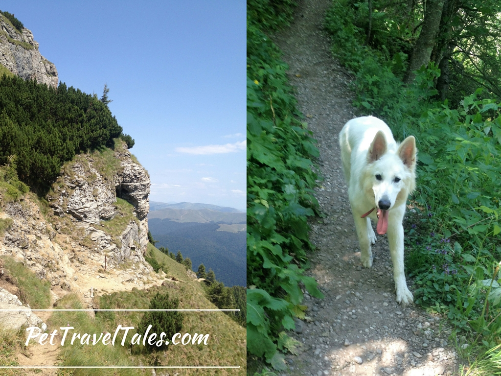 Left- more difficult part of the trail. Right - Ares walking up the mountain, all casual!
