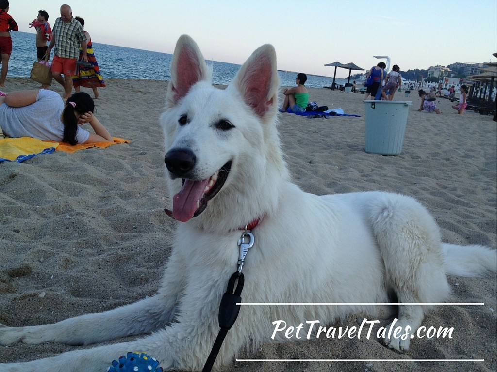 Finding the best pet friendly hotel