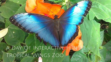 Butterfly Tropical Wings Zoo