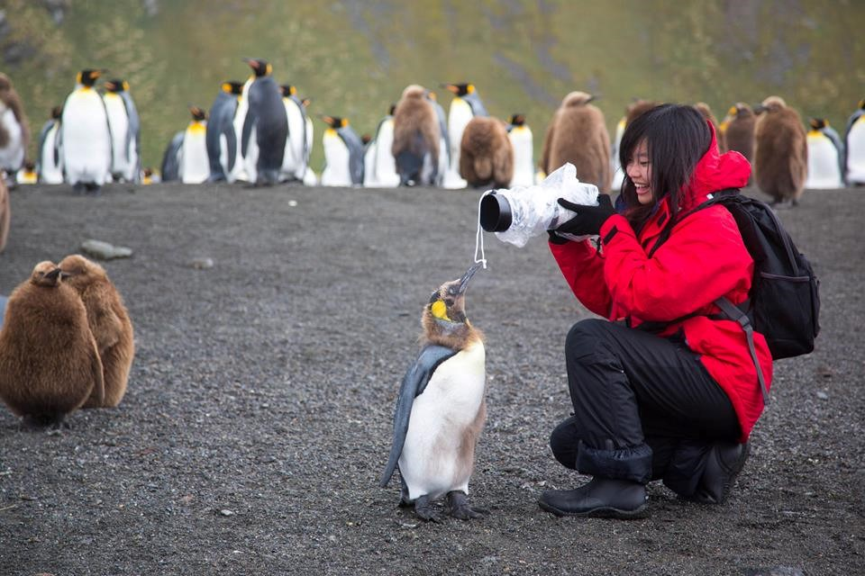 Pier Photographing a Penguin