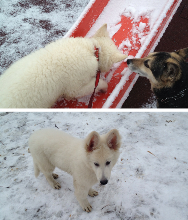 Are's first snow when he was 3-4 months old