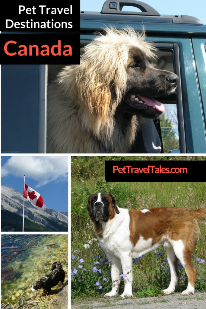 Pet Travel Destinations: Canada, Your Dog, and You