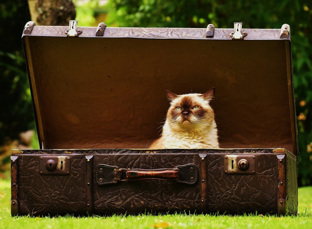 cat luggage