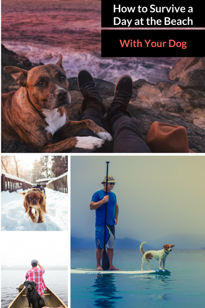Tips and Ideas for Active Seniors Who Travel With Pets