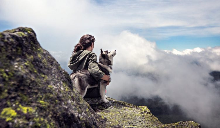 Taking Your Pet on a Road Trip Around the United States